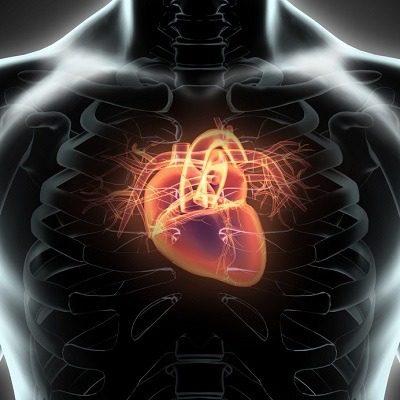 Arginin có công dụng tốt với hệ tim mạch thuoctotso1.com