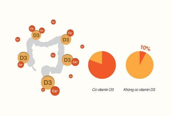 Khi thiếu Vitamin D3, ruột không hấp thu đủ Canxi và phospho làm giảm canxi trong máu